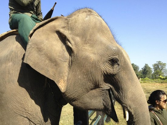 Jungle Sunset Camp: Elephant Breeding Centre