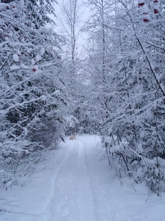 Alpenrose Bed and Breakfast: Winter Trail