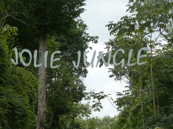 Jolie Jungle 사진