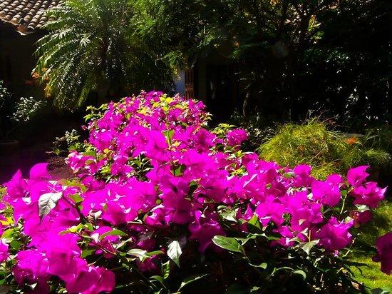 Hotel Patio del Malinche: Algunas de las plantas presentes en el hotel.