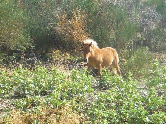 Agriturismo Val di Boccio: Uno dei cavalli dell'agriturismo