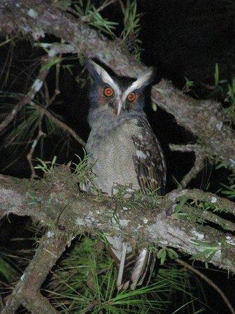 Esteban Daily Guided Tours: Long eared owl