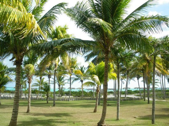Sol Cayo Guillermo: coconut trees and sea