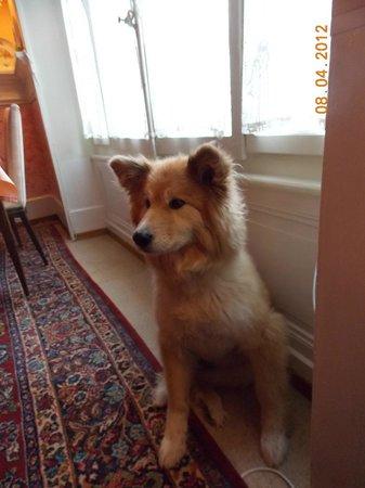 Les Airelles: Luci, le chien.