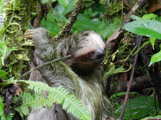 Parque Nacional Braulio Carrillo : Sloth!