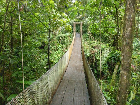 Parque Nacional Braulio Carrillo: Hanging bridge within the park