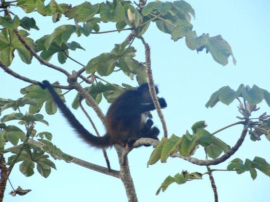 Heaven at the Hard Rock Hotel Riviera Maya: Monkey Tour 