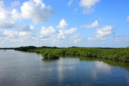 Villa Las Brujas: Cayo Las Brujas mangroves.
