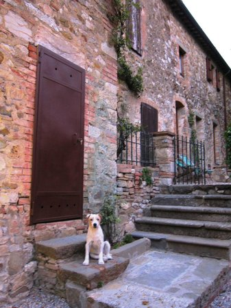 Fattoria Tregole: Frankie the dog