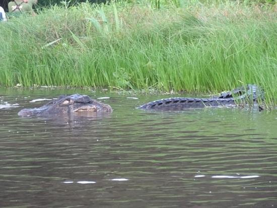 Napo Wildlife Center Ecolodge: Why you don't swim in the lake...