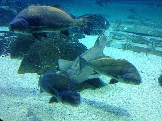 Aquarium Picture Of Adventure Aquarium Camden Tripadvisor