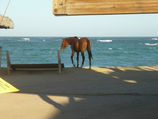 Cabo Pulmo Beach Resort: Right by the hotel, a random unrestrained, unattended horse just walking around!