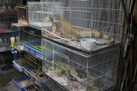 Chatuchak Weekend Market: Reptiles for sale