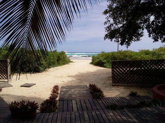 Redmangrove: View from the lodge