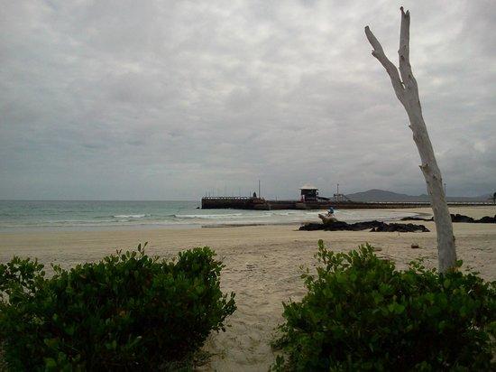 Red Mangrove Isabela Lodge: Isabella Island