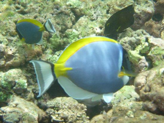 Desroches Island : Snorkelling near villa