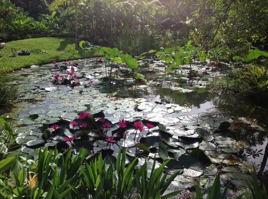 Sergeant House: Take some time to enjoy the beautiful pond full of water lilly and lotus flowers.