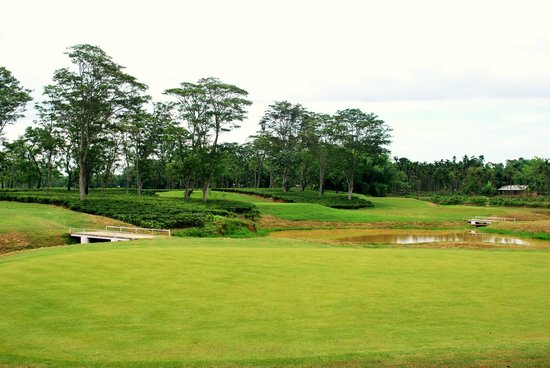 Kaziranga Golf Resort : The verdant green