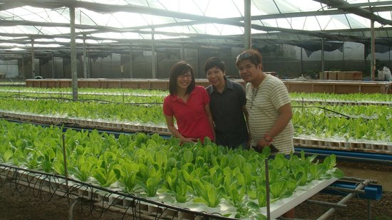 Chateau Royale Hotel Resort and Spa: lettuce