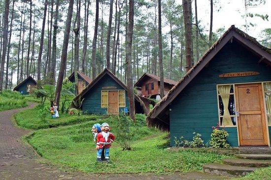 Grafika Cikole Hotel & Camping: The wooden house (Standard)