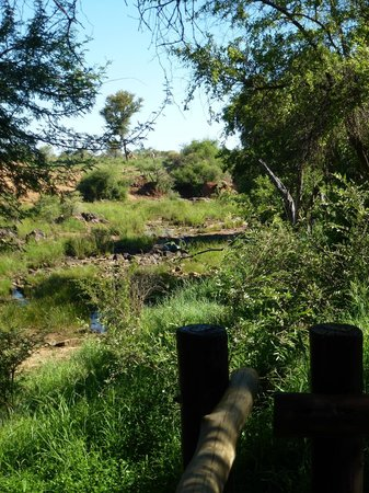 Madikwe River Lodge: Elephant crossing viewed from our deck