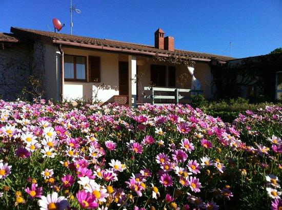 Hotel Terre di Casole: The garden