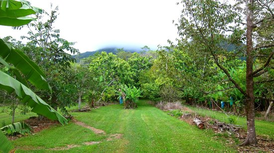 Cape Trib Farmstay B&B: View from Cabin