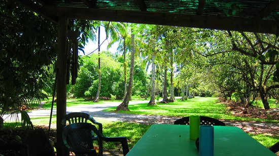 Cape Trib Farmstay B&B: Fruit trees