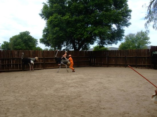 Safari Ostrich Show Farm: Kids will enjoy the ride