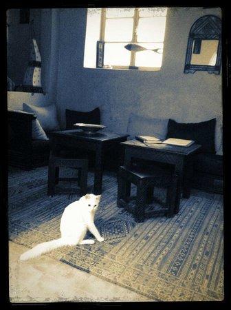 Riad Zelaka: Mimoun dans le salon
