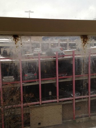 Grand Royale Hotel: Multiple bird poop on inside of window.