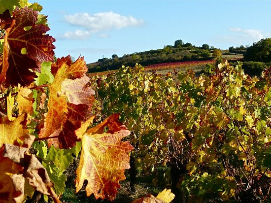 Verzeille, France: Autumn colours in the vineyards