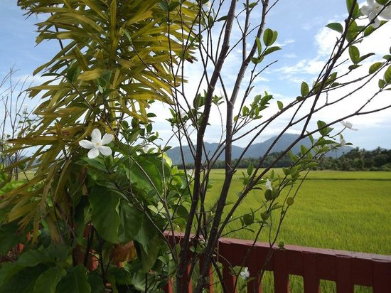 Jasmine Villa Tropical Garden: Il panorama