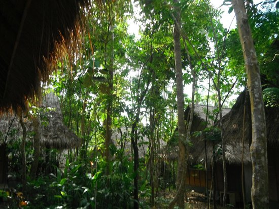 Narima Bungalow Resort: Somewhat jungle..