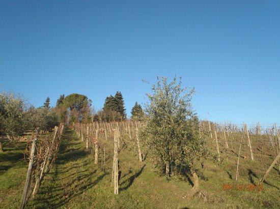 La Collina degli Olivi: Vigna