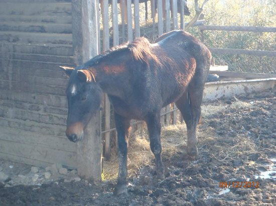 La Collina degli Olivi: Cavallo