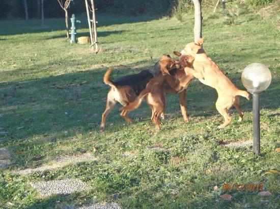 La Collina degli Olivi: Anche i cani sono allegri e giocosi ...