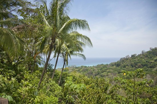 Crocodile Bay Resort - An All-Inclusive Resort: View from the forest