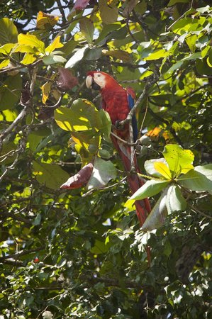 Crocodile Bay Resort: Macaw