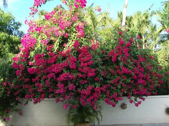 Buccaneer Beach Club: Flowering plant in the pool area