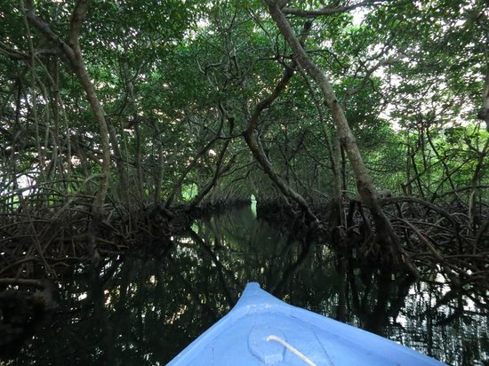 Reef House Resort : The mangrove trip is worth taking