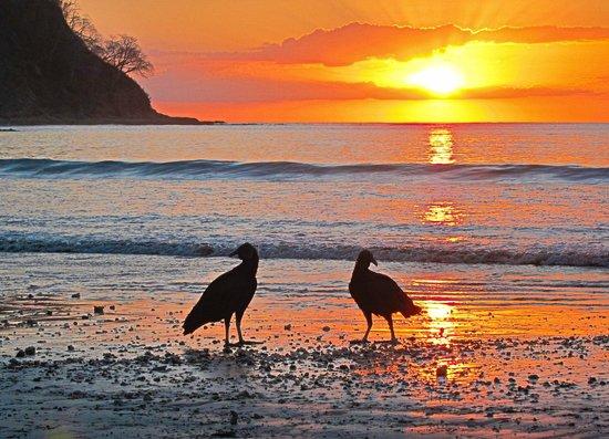 ذا هايداواي هوتل: Buzzards on the beach
