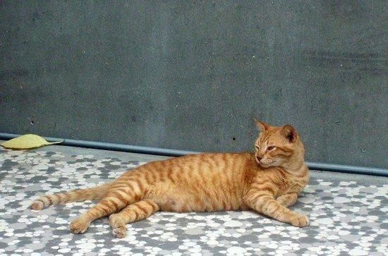 Phi Phi Palms Residence: Tiger, the macho hotel mascot