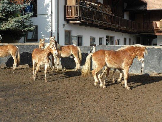 Naturhotel Wieserhof: Cavalli