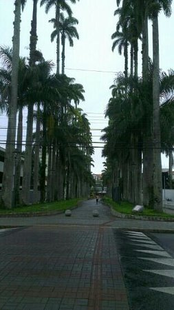 Joinville, SC: Rua Palmas