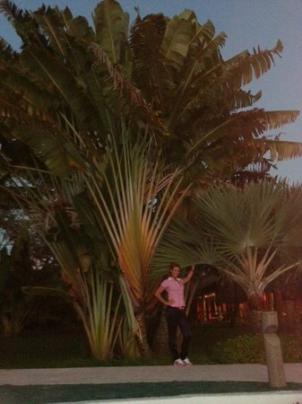 Catalonia Playa Maroma: vegetazione messicana