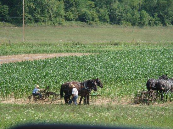 The Inn at Honey Run : plowing fields