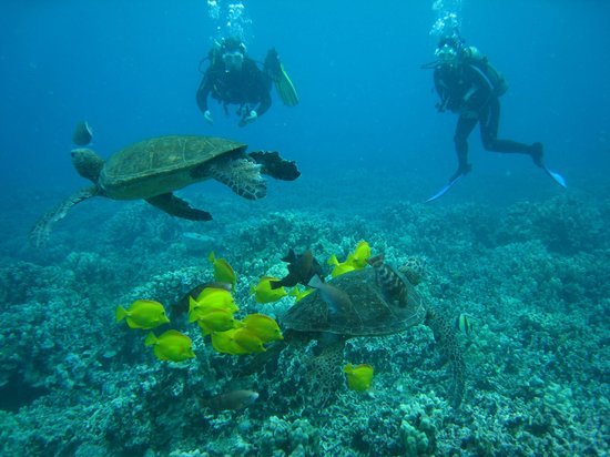 Mauna Lani Sea Adventures: Turtle Cleaning Station