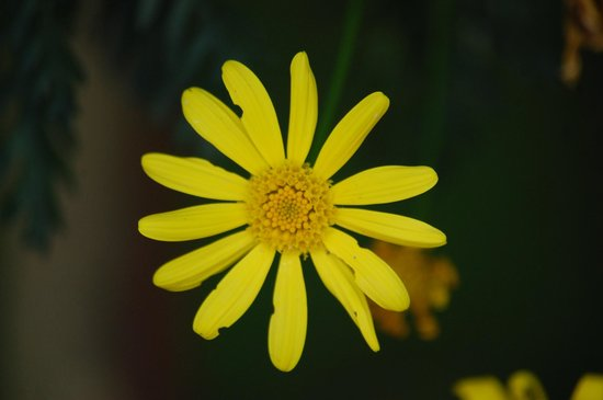 Whispering Pines Campground: Flower