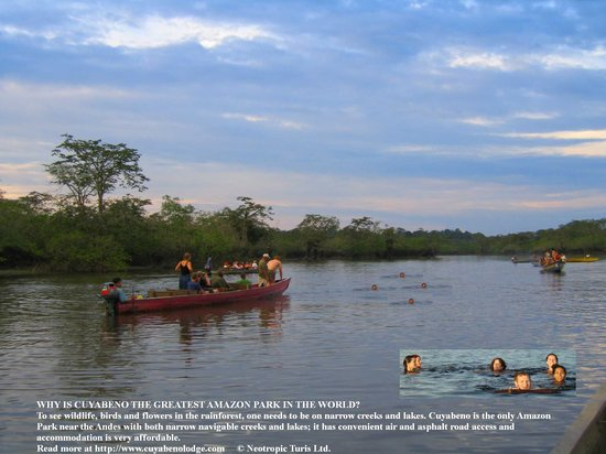 Cuyabeno Lodge: Go swimming with your new found friends